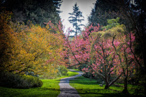The History of Bioretention in Washington State